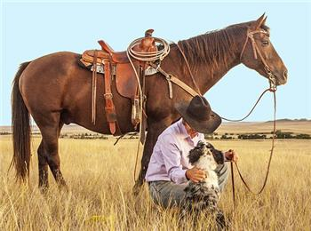 horse-man-dog